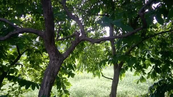 Malerischer Blick auf frisches Grün im Park