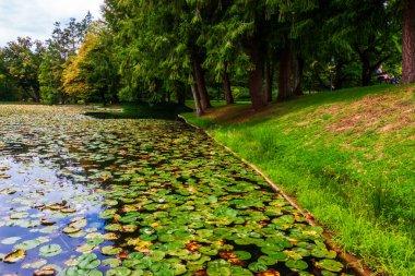 "Картина, постер, плакат, фотообои ""горное озеро в парке на фоне облаков на голубом небе цветы природа программа"", артикул 407718550"
