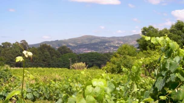 hegyek és homályos szőlő táj
