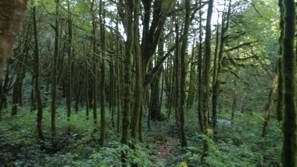 Kamera mozog előre belsejében a titokzatos zöld erdő.