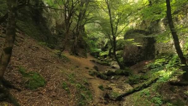 Fotocamera volante allinterno del canyon con fortezza e misteriosa foresta verde