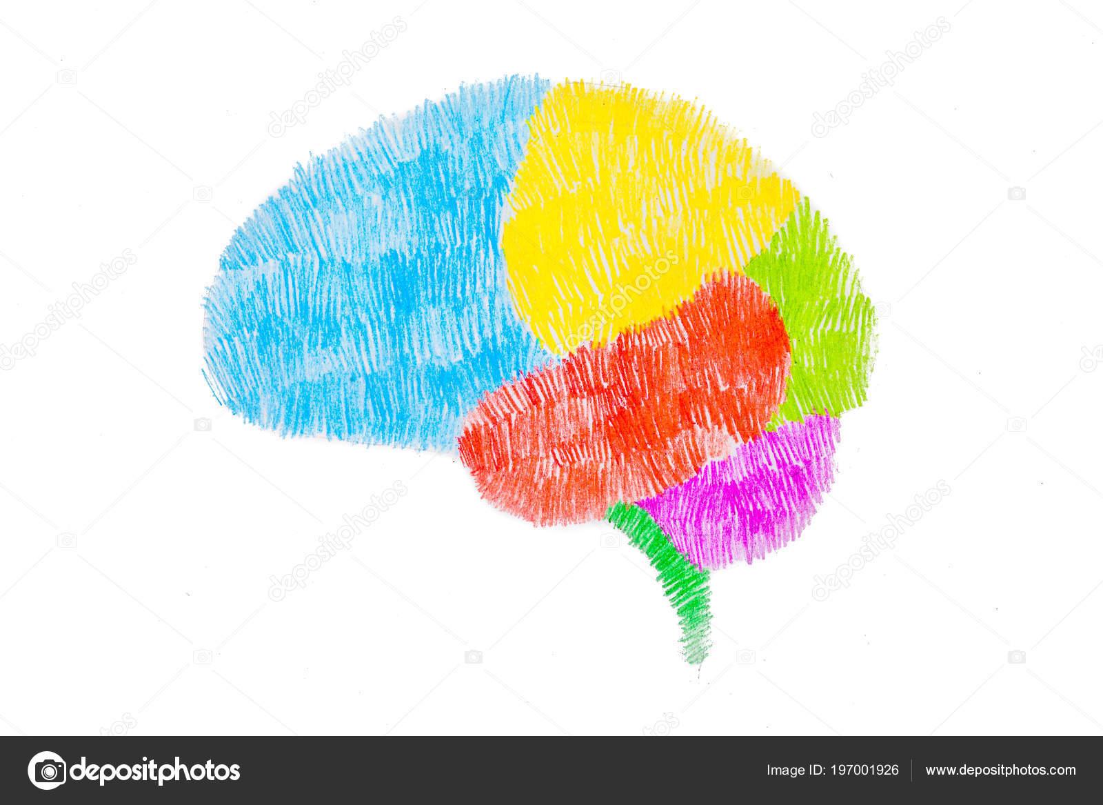 Croquis Dessin Graphiques Cerveau Par Crayon Couleur Photographie
