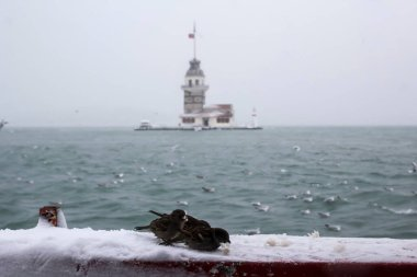 Maiden's Tower (Kiz Kulesi) winter with snow and there are seagull birds around, from Istanbul, Turkey