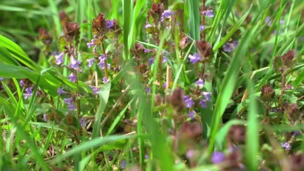 Krásná louka květiny kvetoucí v zeleném trávníku.