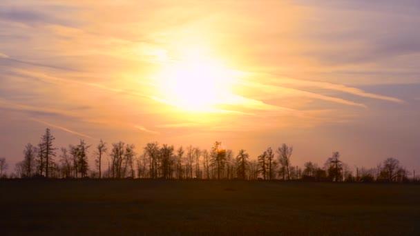 Nad vrcholky stromů svítí slunce. Auta projíždějící lesem za zlatého východu slunce