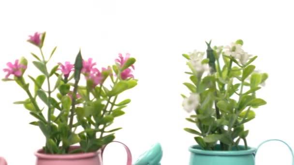 Rózsaszín, lila, és wihte mesterséges virágok virágcserép forog lassan fehér alapon.