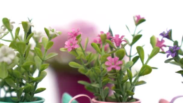 Růžové, fialové, a wihte umělé květiny s květináčem otáčet pomalu na bílém pozadí.