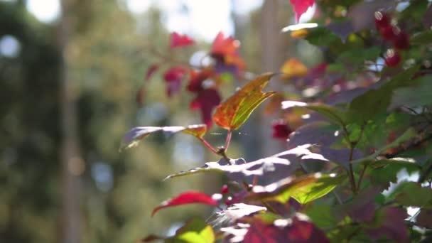 erdei táj, zár-megjelöl. lombozat, fű nap közelről