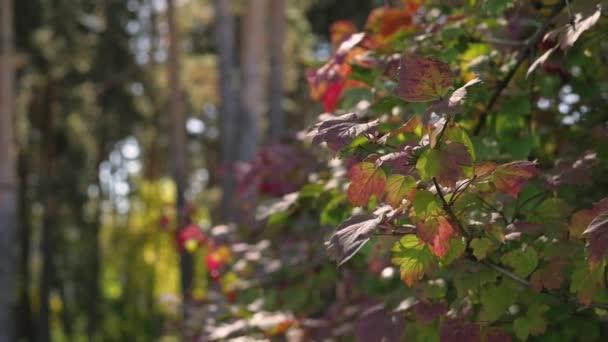 lesní krajina detail. slunce skrze listí, tráva zblízka