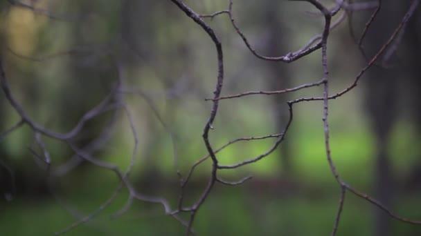 Zelené listy a větve na bílém pozadí