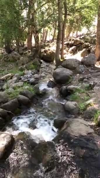 Tajemná hornatá džungle se stromy opřenou o rychlý potok s peřejemi. Kouzelná scenérie deštného lesa a řeky se skalami. Divoká a živá vegetace tropického lesa. vertikální video
