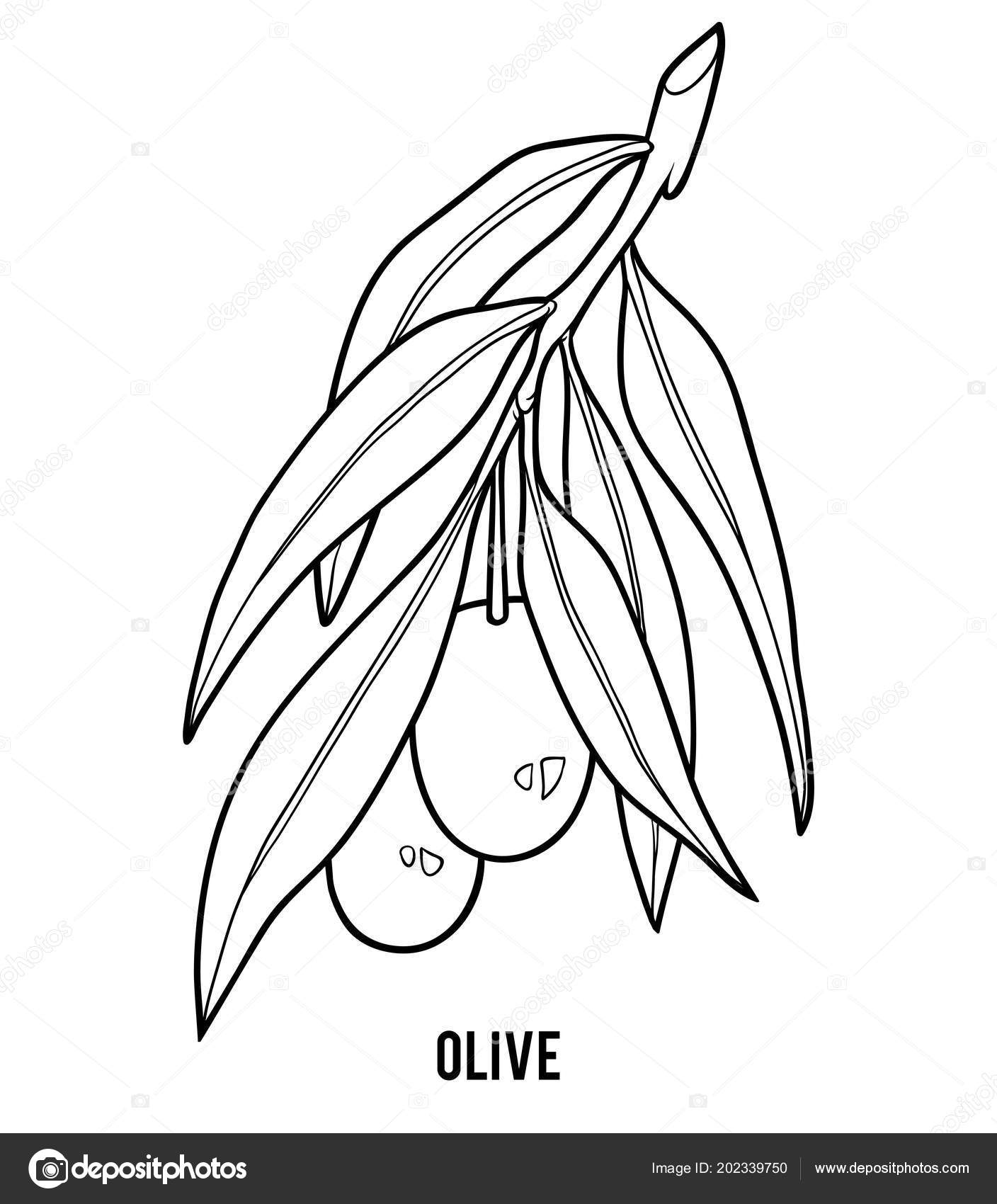 Coloring Book Children Olive Tree Stock Vector Ksenyasavva