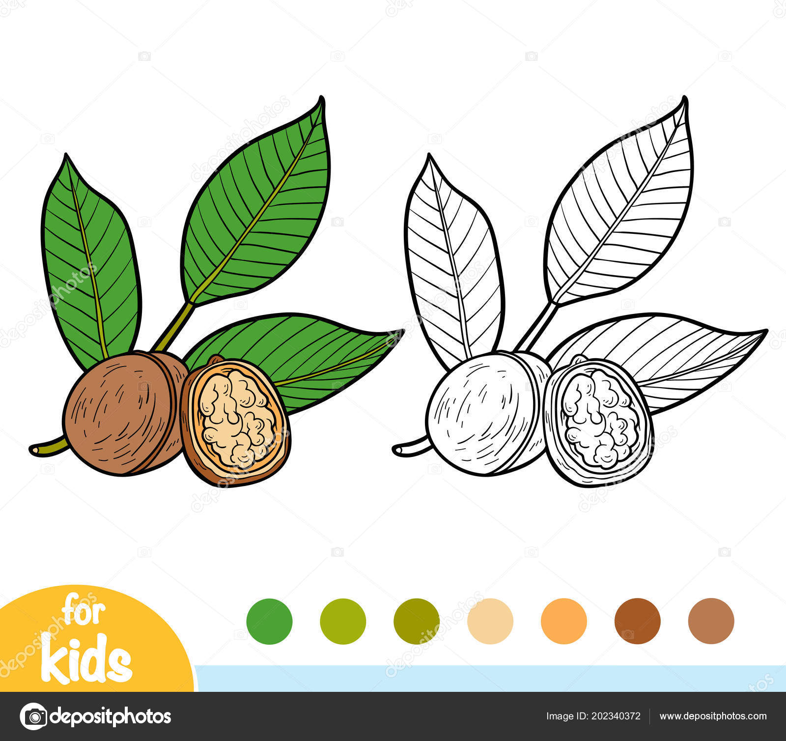 Coloring Book Children Walnut Branch Stock Vector C Ksenya Savva