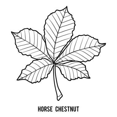 Coloring book for children, Horse Chestnut