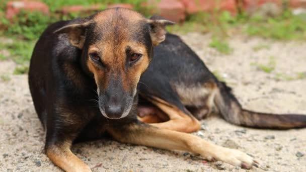 Niedlicher indischer brauner Hund sitzt auf Sand und blickt mit einem einzigartigen Lächeln in die Kamera.