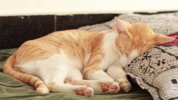 Aranyos gyömbérmacska a földön, zöld lepedővel és párnával. Bolyhos kisállat kényelmesen letelepedett aludni. Hangulatos otthoni háttér vicces kisállat.