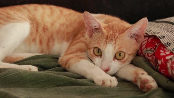 Roztomilá zázvorová kočka na podlaze se zeleným prostěradlem a polštářem. Chlupatý mazlíček se pohodlně usadil ke spánku. Útulné domácí pozadí s legrační pet.