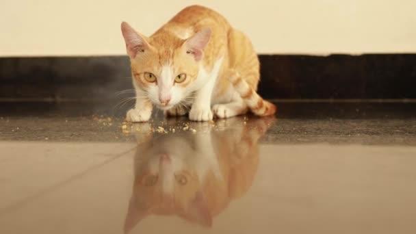 červená a bílá kočka jí z podlahy rusk potravin