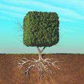 Kubická stromová struktura dělená