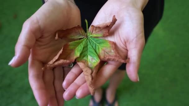 Autunno acero foglio illustrativo nel palmo di una ragazza