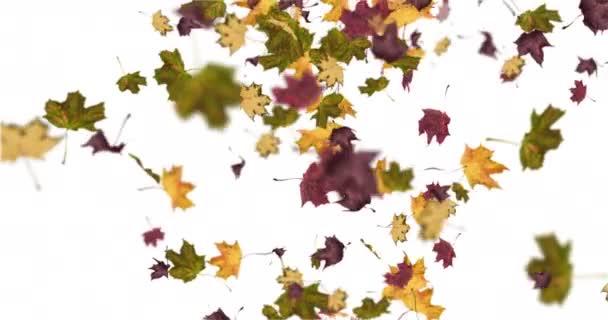 Animace podzimního listí