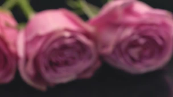 Roses of pink color on a dark background the smell of freshness of perfumes bouquet gift surprise rose flower love mood.