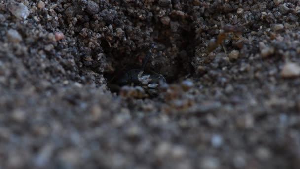 Mravenci přesunutí velké hmyz z hnízda