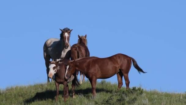 Malé stádo koní proti modré obloze travnatém kopci