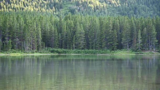 Ženská Moose plavkyně až k dalekým okrajům jezera v Montaně
