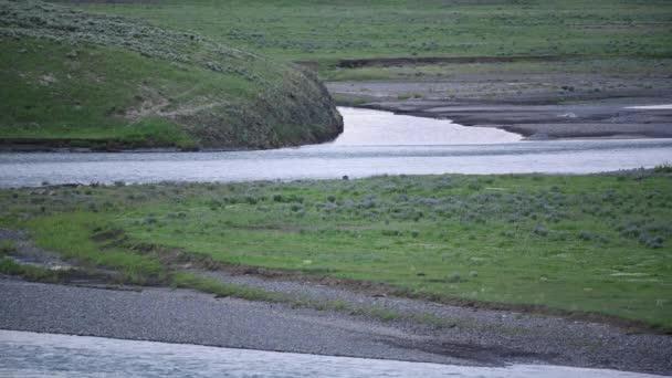 Lamar folyó folyik Wolf Feeds a bölény hasított test