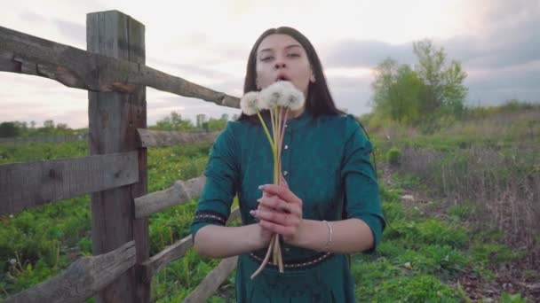 Brunette blowing on a bouquet of dandelions. Young girl farmer resting in nature. Near the fence, green meadow, sunset.