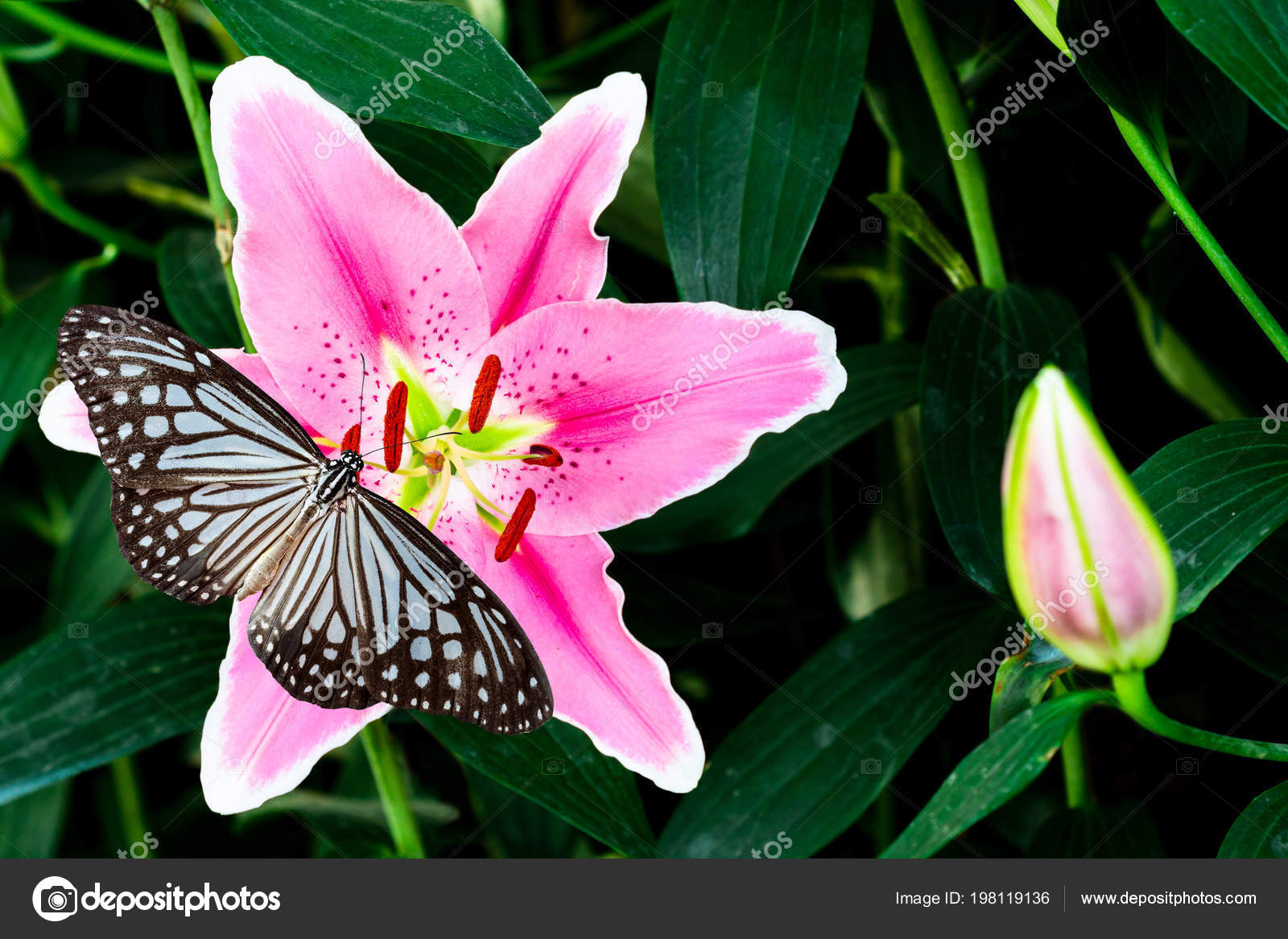 Pink lily flower butterfly green background stock photo pink lily flower butterfly green background stock photo izmirmasajfo