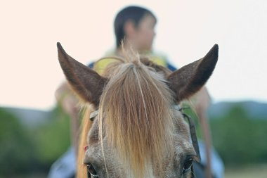 Detailed photograph of horse's head with child rider outdoors.