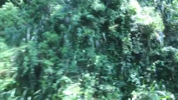 Ella, Srí Lanka, mozgásban lévő erdő