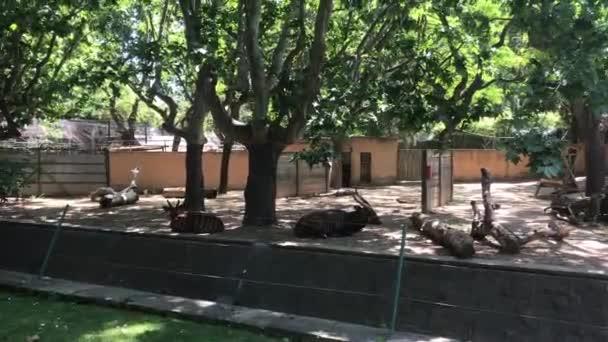 Barcelona, Spanyolország, Egy nagy fa