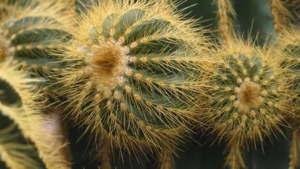 Close up of cactus in the desert