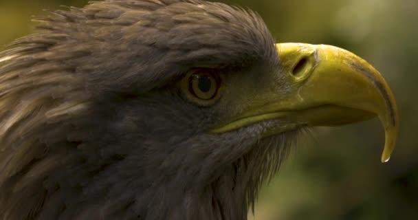 Közelíts a sasfejre a szemtől a csőrig. Körülnézek..