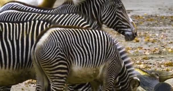 A zebrák közelsége