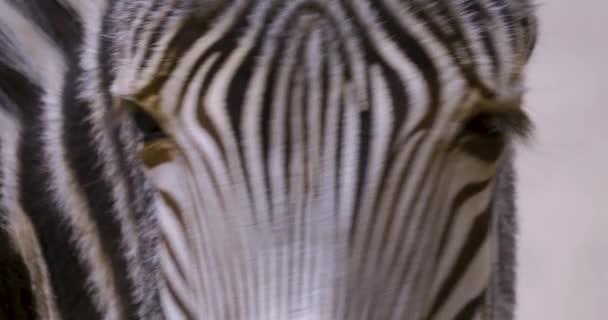Zavřít zebry