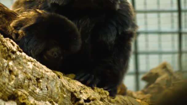 Detailní záběr černého kosmana