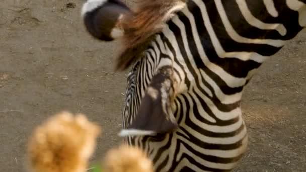 Közelkép a zebrafejről