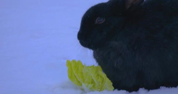 Szürke nyuszi a Hófehérkében salátát eszik