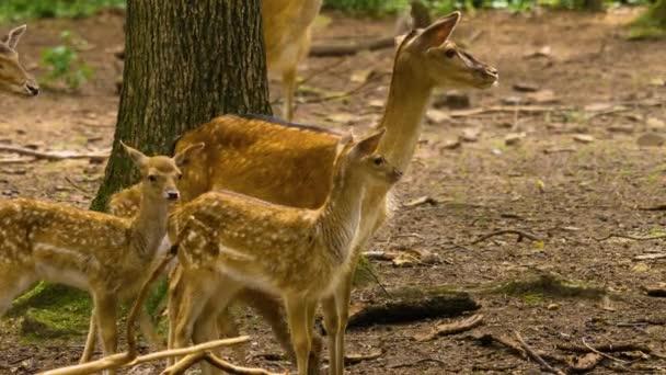 Zblízka z přehrady jelena v lese za slunečného dne