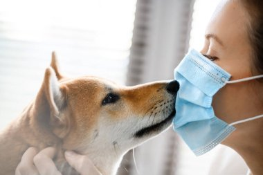A girl in a medical mask and a dog of the Shiba Inu breed look yey to yey to each other.