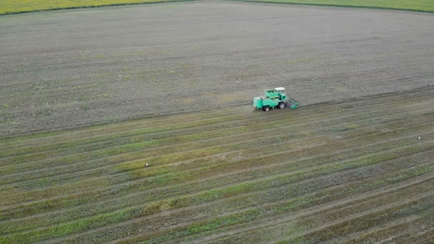 Aerial view of Combine harvester agriculture machine harvesting golden ripe wheat field.