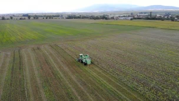 Campo di frumento maturo vista aerea di Combine harvester agricoltura macchina raccolta dorata.