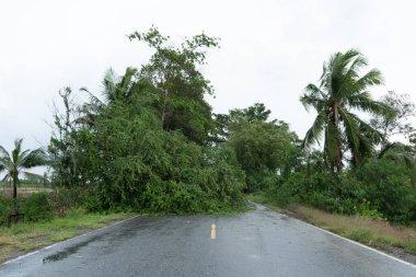 A fallen tree blocked the road