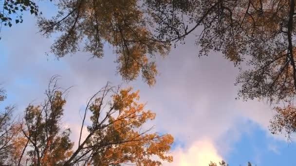 podzimní stromy a večerní obloze