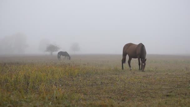 Egy gyönyörű barna ló legel a réten ősszel egy ködös reggelen. Egy ködös őszi reggelen a ló füvet eszik a mezőn..