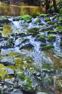 Mossy rocks in stream with flowing water in Muir Woods National Monument Park, California